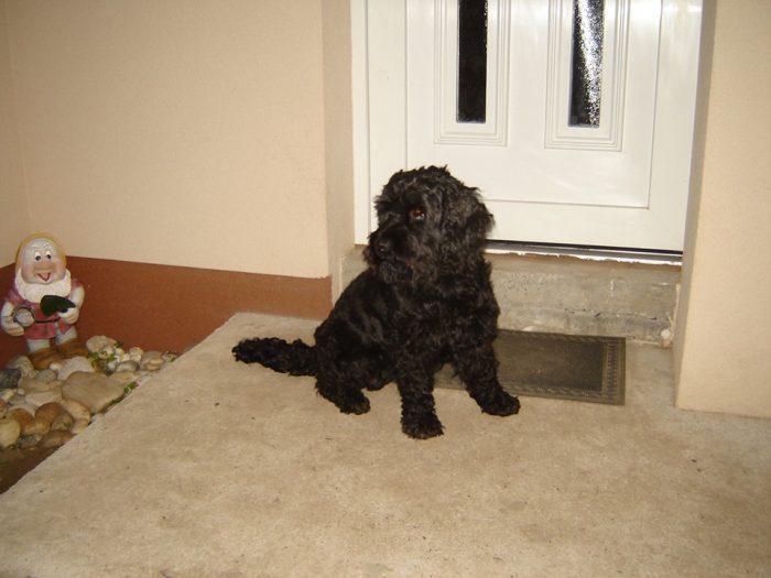 Ma reggelre meghalt a kisebb kutya.